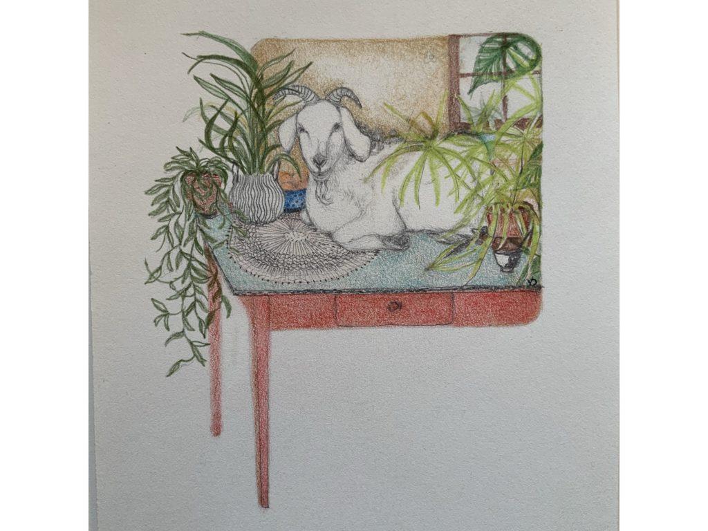 V.DEMEY/ La chèvre envahissante
